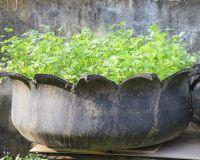 Neumáticos para cultivar hortalizas o hierbas aromáticas