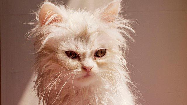 Gato mojado 1