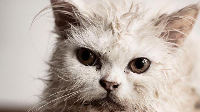 Gato mojado 9
