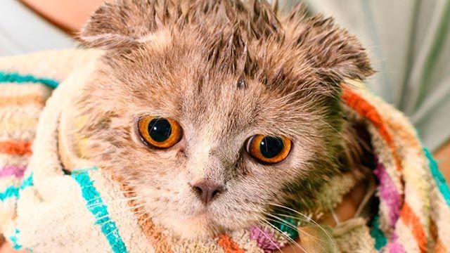 Gato mojado 6