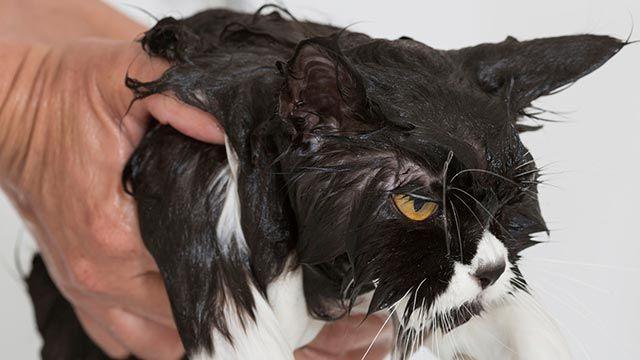 Gato mojado 7