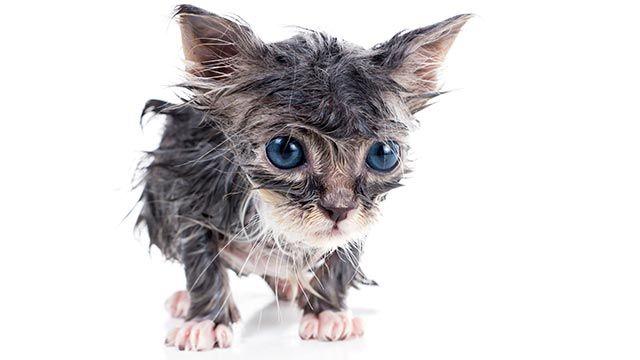 Gato mojado 3