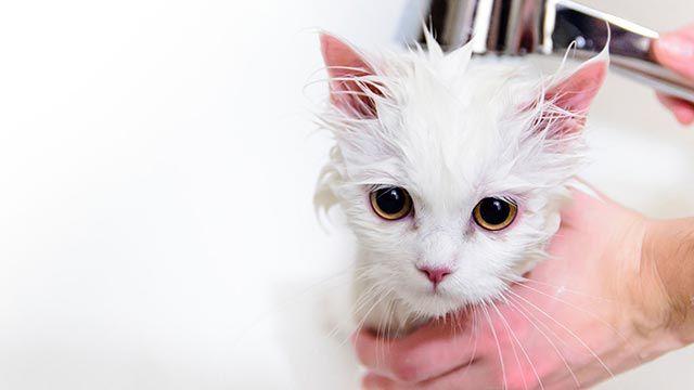Gato mojado 2