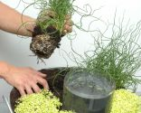Composición con plantas acuáticas