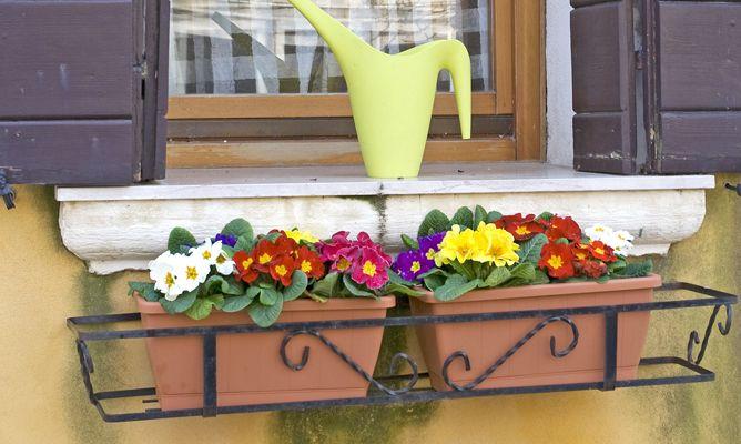 Plantas de invierno para el balc n decogarden for Plantas para invierno
