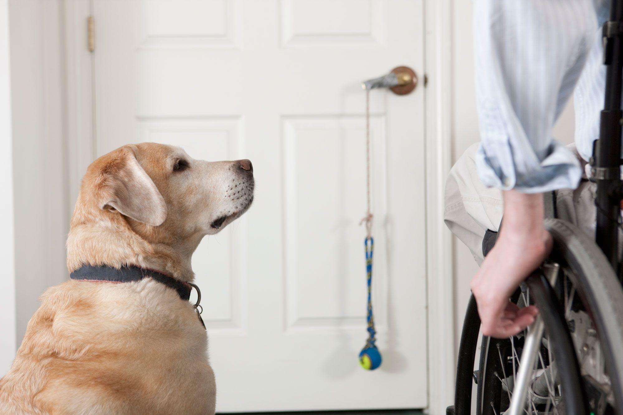 perros discapacidad física