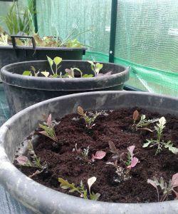 Plantas y hortalizas en invernadero