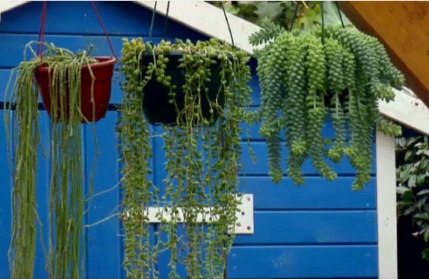 Jaula de suculentas bricoman a - Como construir un terrario ...