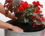 Composición floral de color rojo para zona de sombra