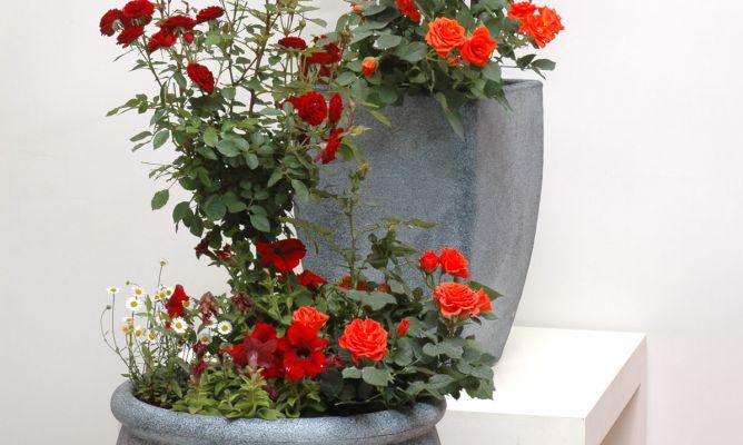 Composici n floral en maceta con rosales decogarden - Rosales en macetas ...