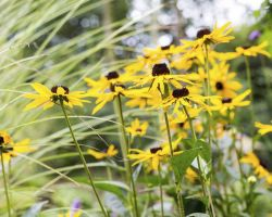 Parterre de plantas vivaces amarillas y blancas
