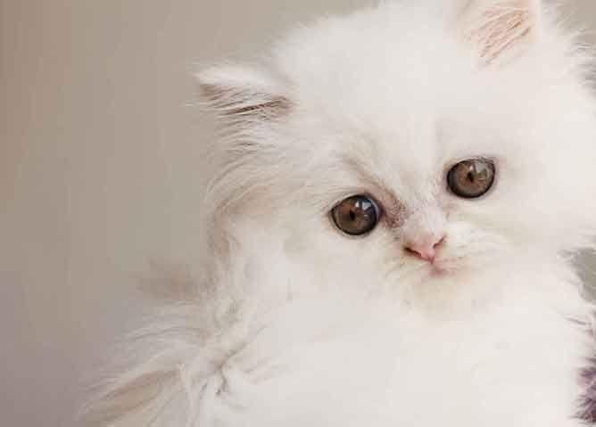 Fotos de gatos tristes