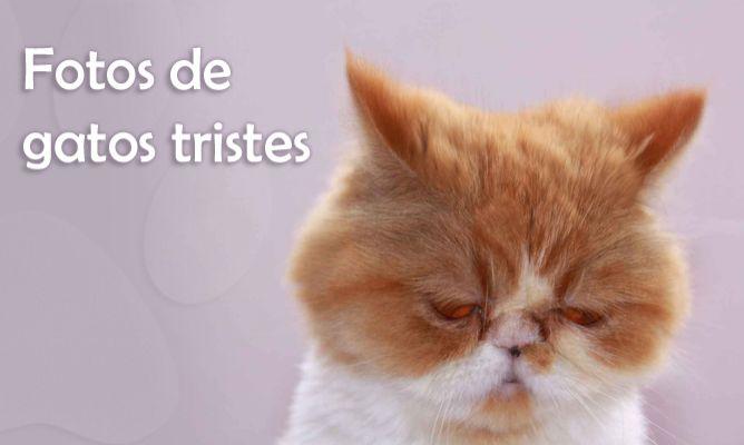 Fotos de gatos tristes - Hogarmania