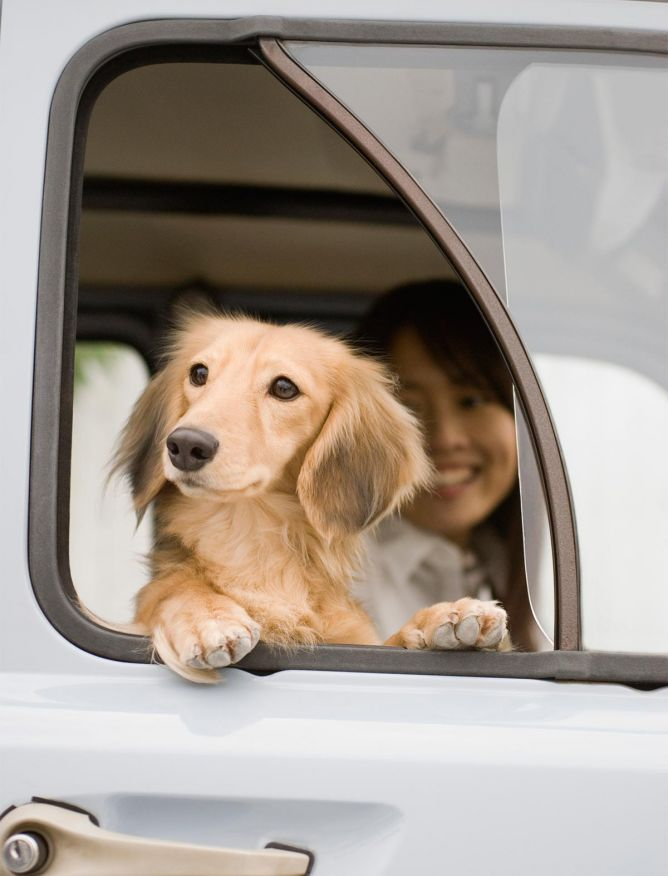Perros que adoran asomarse por la ventanilla
