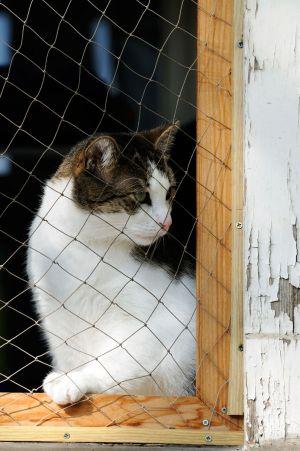 Síndrome del gato paracaidista: cómo evitar las caídas de los gatos