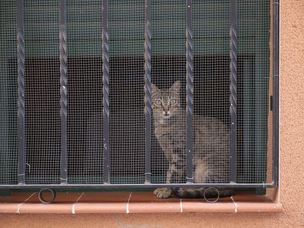 C mo evitar las ca das de los gatos hogarmania for Red transparente para gatos