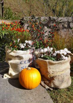 Jardineras con sacos