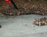 Sopladores y aspiradores de hojas