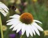 Plantas del jardín grande en tonos blancos