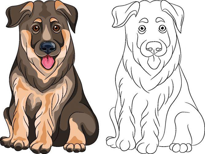 Dibujo para colorear de perros - raza pastor alemán