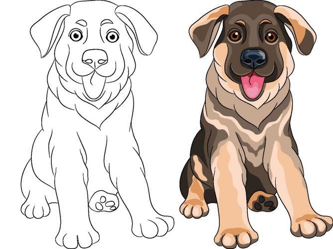 dibujos de perros para colorear - raza pastor alemán puppy