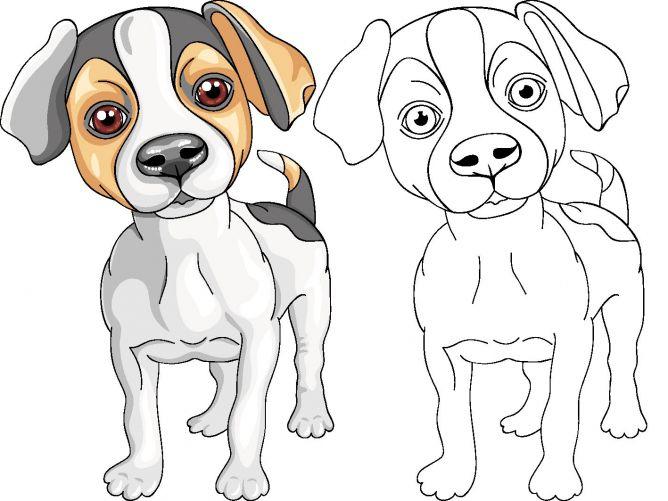 Dibujos de perros para colorear - perro Jack Russell Terrier