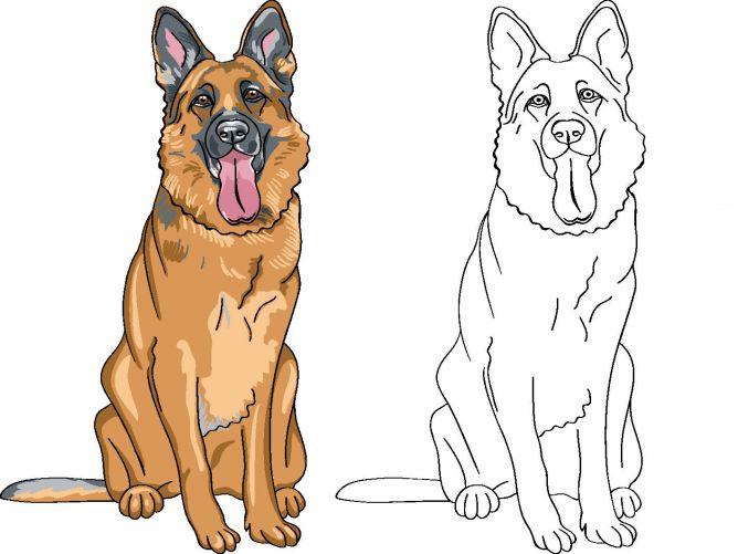 dibujo de perro para colorear - pastor alemán