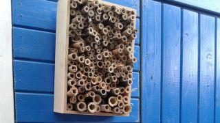 Hoteles de insectos en cuadros 1