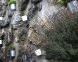 Decorar fachada exterior con plantas