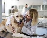 esterilización perras