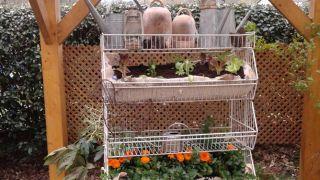 Jardín vertical reutilizando un frutero