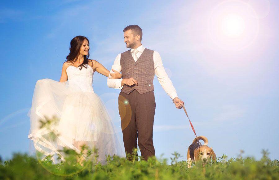perros en bodas - sesión fotos
