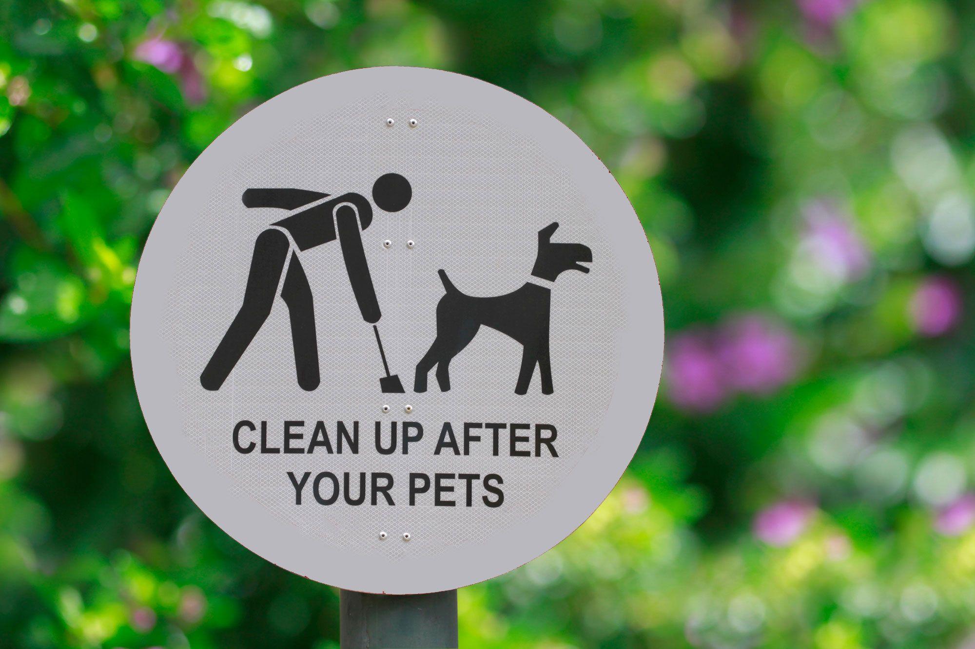 recoger excrementos perros