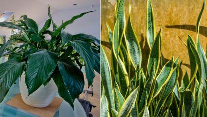 C mo cuidar las plantas de interior en invierno hogarmania for Cuidar hierbabuena en interior