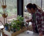 Plantar plantas aromáticas en bricks