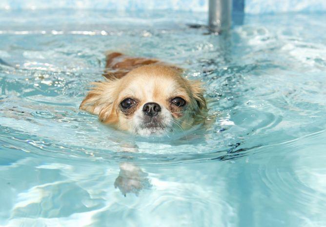 perro cachorro piscina
