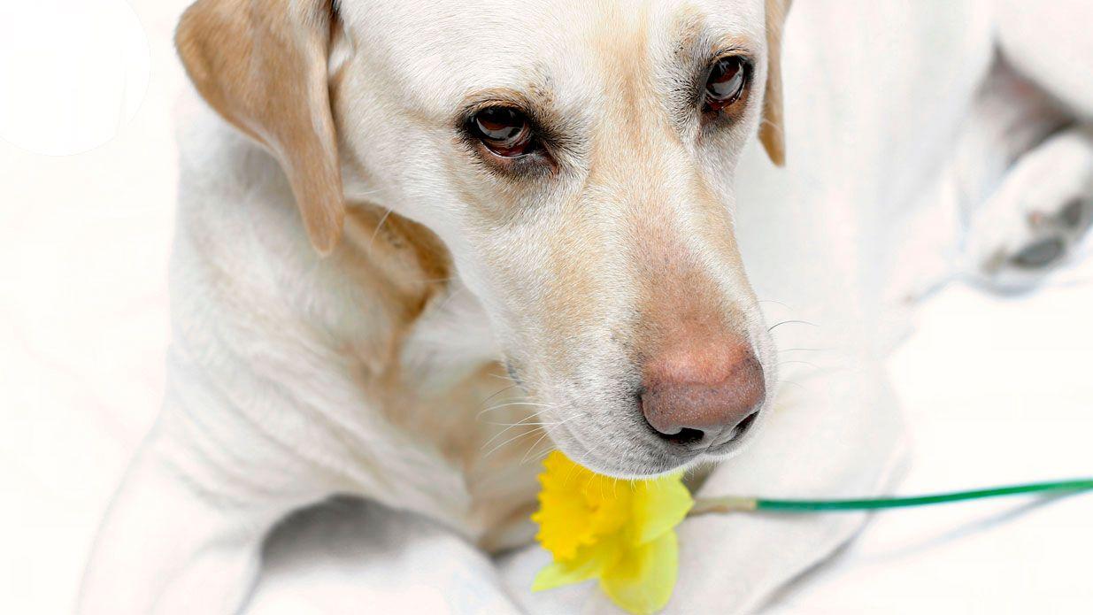 cuidados primavera mascotas - alergias