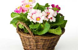 Cestas de mimbre para arreglos florales