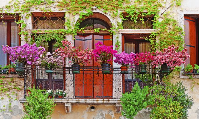 8 Flores Perfectas Para Balcones Hogarmania