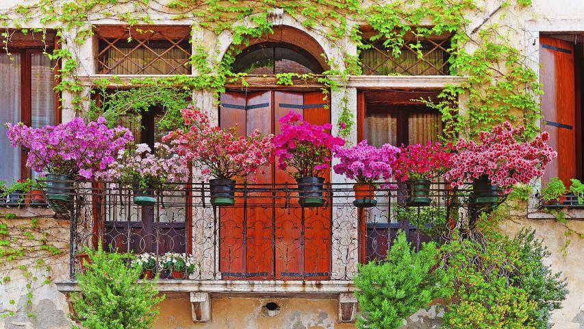 8 Flores Perfectas Para Balcones Hogarmania - Fotos-de-balcones-con-flores