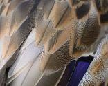 stop moda cruel - plumas