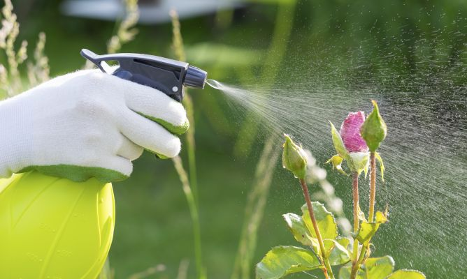 Tipos de insecticidas para jardiner a hogarmania - Hogarmania jardineria ...