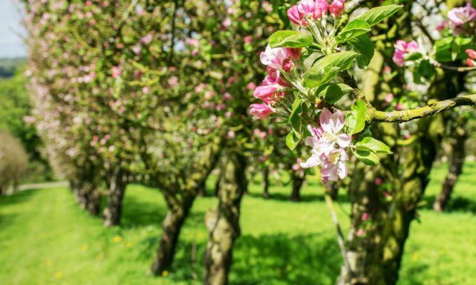 5 rboles frutales para cultivar en jard n o en maceta - Arboles jardin ...