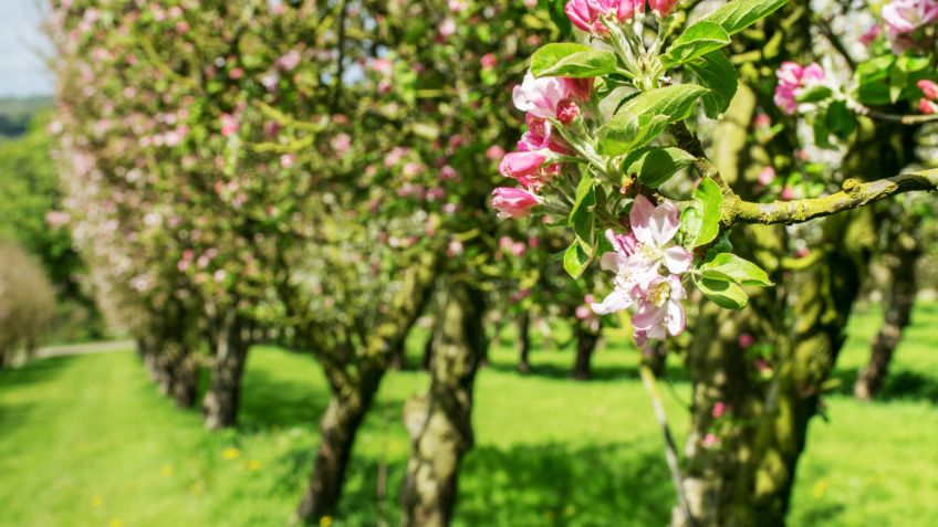 5 rboles frutales para cultivar en jard n o en maceta