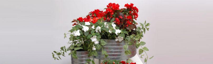 Plantas de sombra - Flores de sombra ...
