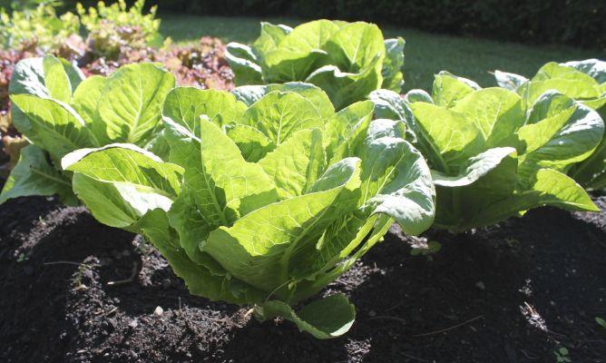 7 alimentos que puedes cultivar en casa