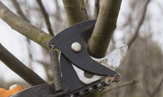 Cortar ramas para hacer estructuras de jardiner a bricoman a - Bricomania jardineria ...