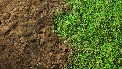 C mo sembrar c sped en un suelo arenoso hogarmania - Como plantar cesped en el jardin ...