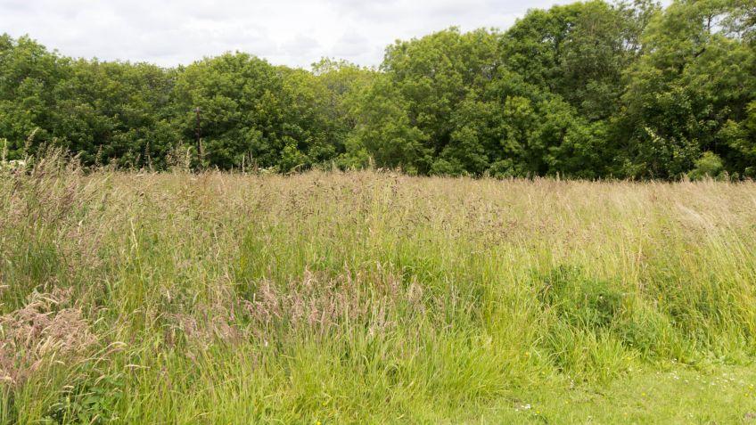 Diseño de jardín con hierba alta y corta - Decogarden