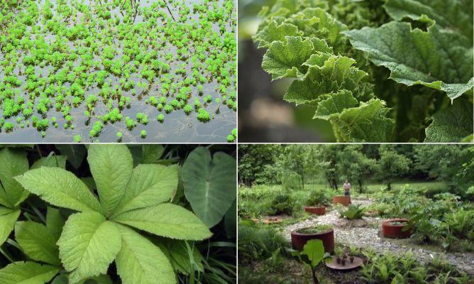 Jard n tem tico con plantas de hojas grandes decogarden - Plantas de hojas grandes y verdes de exterior ...